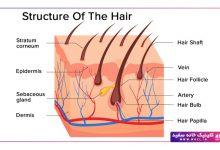 ساختار فولیکول مو و کوتیکول مو
